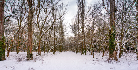 snow covered path among the leafless trees. lovely nature scenery in winter park Stock Photo