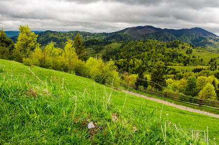 grassy fields on forested hills. beautiful springtime landscape in mountains on an overcast day