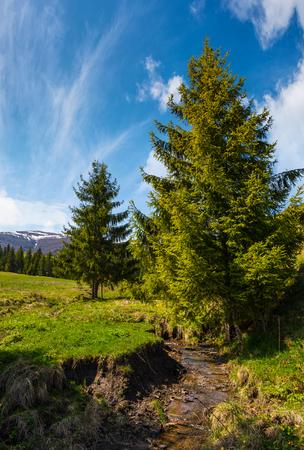 小川に沿って草の丘の上にスプルースの木。豪華な空の下で春の美しい山岳風景