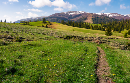 grassy fields on rolling hills. spruce forest on slopes at the foot of the mountain ridge in springtime Stock Photo - 94918737