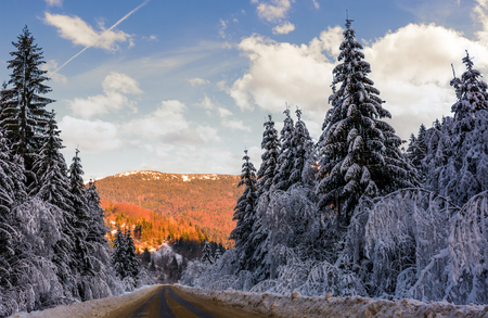 road in winter spruce forest. beautiful nature scenery in mountains at evening