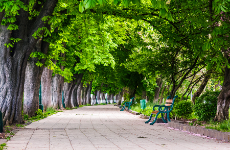benches on Kiev embankment in Uzhgorod. lovely chestnut alley in summertime