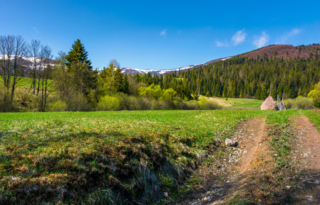 country road through rural fields in springtime. lovely nature scenery at the foot of the mountain with spruce forest and snowy tops