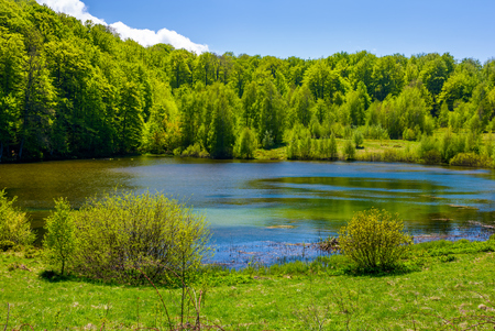grassy shore of mountain lake among the forest. beautiful scenery in fine springtime weather