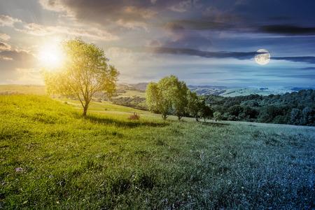 시간 변화 개념. 잔디 사면에 나무의 행입니다. 여름에 아름다운 시골