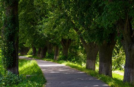 ウジ川堤防のヨーロッパ最長のリンデン路地