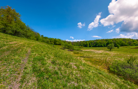 grassy glade on hill among the forest. lovely nature scenery under the clouds on a blue sky in springtime