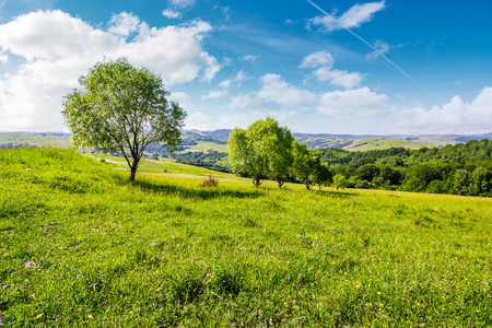 row of trees on grassy slope. lovely countryside in summer Stock Photo