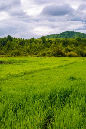 山の森の近くの草原。曇り日の美しい田舎の風景