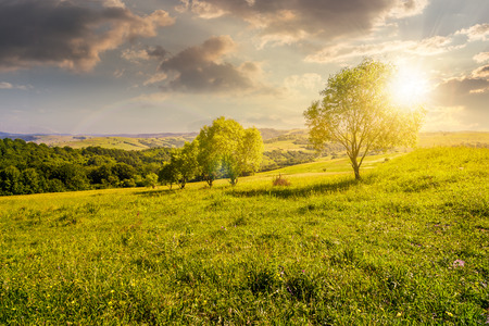 row of trees on grassy slope at sunset. lovely countryside in summer 版權商用圖片 - 95759381