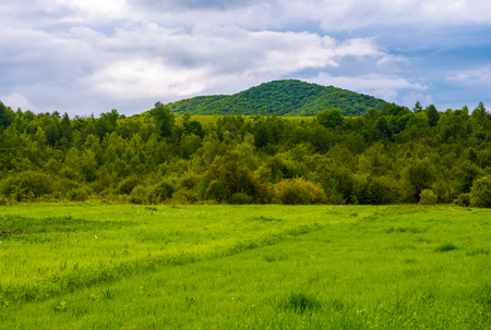 grassy field near the forest in mountains. lovely rural scenery on overcast day Stock Photo