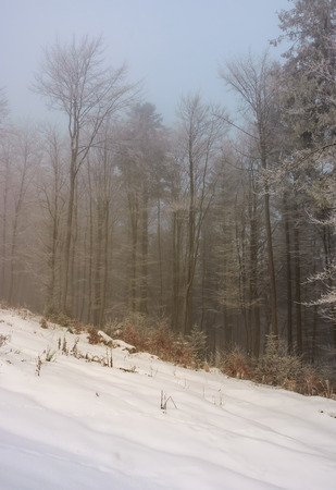 forest in hoarfrost at foggy sunrise. lovely nature scenery in winter Banco de Imagens - 96797844