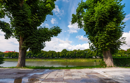 beautiful chestnut alley in summer. tall trees on the Kyiv embankment of Uzhgorod town, Ukraine. open view to other bank of the river with linden alley on Nezalezhnosti embankment
