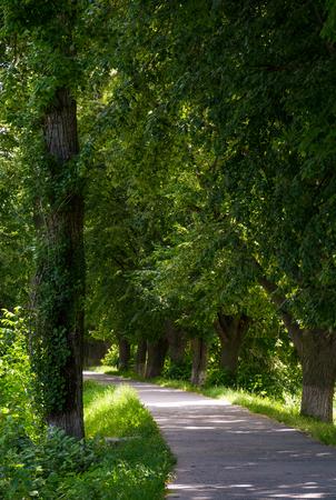 path under the trees of longest linden alley in Europe. location Uzhgorod, Ukraine