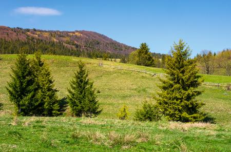 mountainous landscape with coniferous forest. lovely springtime scenery at the foot of Borzhava mountain ridge. location - Pylypets, TransCarpathian region, Ukraine Stock Photo - 96797972