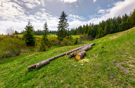 chopped wood near the forest on hillside. springtime nature scenery in mountains on a cloudy day Zdjęcie Seryjne - 96798060