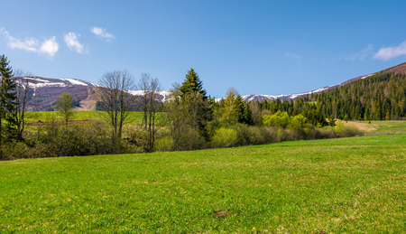 grassy meadow among the forest in mountains. beautiful countryside with snowy tops of mountains in the distance