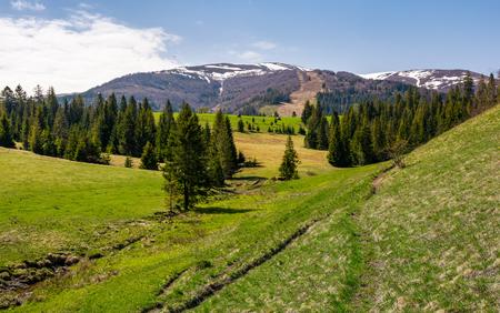 mountainous landscape with coniferous forest. lovely springtime scenery at the foot of Borzhava mountain ridge. location - Pylypets, TransCarpathian region, Ukraine Stock Photo - 96798096