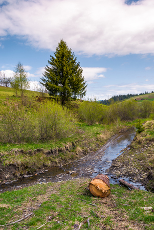 spruce tree and log near the brook. nature scenery with grassy hills in springtime under the cloudy sky