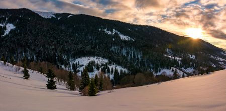 winter panorama in mountains at sunrise. forested hills of mountain ridge and some trees on snowy slopes