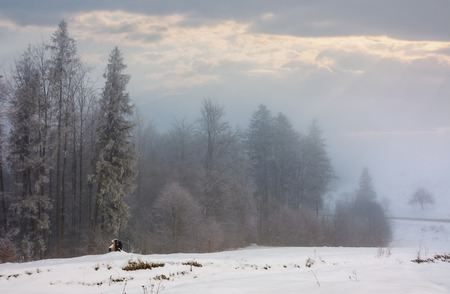 forest in hoarfrost at foggy sunrise. lovely nature scenery in winter Banco de Imagens - 96798125