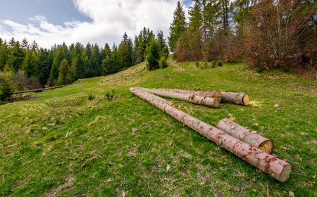chopped wood near the forest on hillside. springtime nature scenery in mountains on a cloudy day