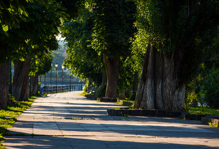 beautiful chestnut alley in summer. lantern among the tall trees on the Kyiv embankment of Uzhgorod town, Ukraine