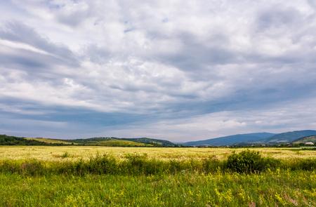 曇りの日に農村部の広いフィールド。 夏の美しい自然の風景