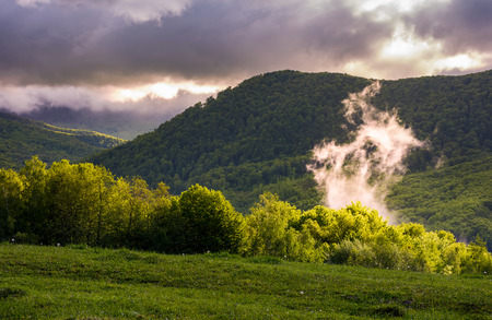 fog rising above the forest on hillside. beautiful mountainous landscape Stock Photo