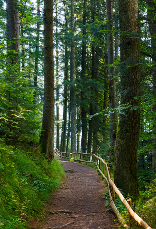 forest trail among the tall trees in the morning. lovely nature scenery. good place for running and walking Stock Photo