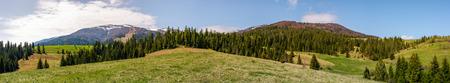 春の山岳風景のパノラマ。草の丘の中腹にスプルースの木々と素敵な風景。遠くに雪のピークを持つ山の尾根