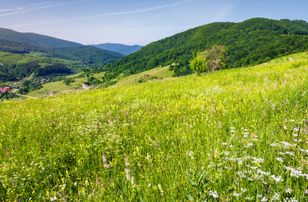 grassy meadow on a hillside. beautiful countryside with village down in the valley. lovely bright summer day