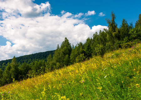wild herbs on a hillside. beautiful nature scenery in summer Stock Photo - 98037961