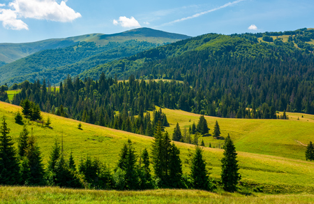 beautiful summer landscape in mountains. spruce forest on a grassy hills. lovely nature concept Stock Photo