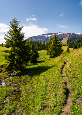 narrow footpath along the forested hills. beautiful landscape of Carpathian mountains in springtime. small brook flows among the spruce trees in parallel to the path