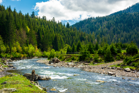 mountain river among the spruce forest. gorgeous landscape on a bright springtime day