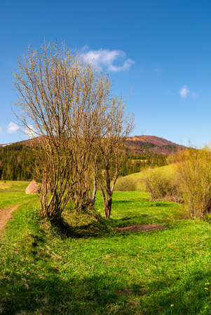 leafless tree in front of a mountain. beautiful countryside scenery in springtime Stock Photo