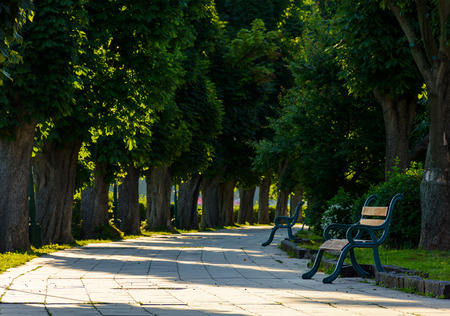 chestnut alley with benches in summertime. beautiful urban scenery in the morning Stock Photo