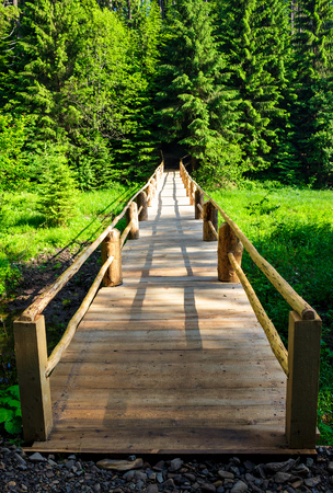 small wooden bridge among the forest. lovely nature scenery in summertime. location Synevyr National Park, Ukraine