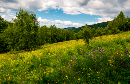 meadow with wild herbs among the forest in summer. beautiful nature scenery in mountains on a cloudy day Stock Photo - 98803857