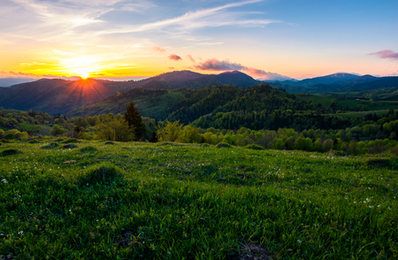 sunset in mountainous countryside. beautiful landscape of Carpathian mountains with grassy meadow, forested hills and blue sky with purple clouds
