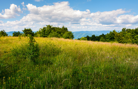 meadow with wild herbs on top of a hill in summer. beautiful nature scenery in mountains on a cloudy day Stock Photo