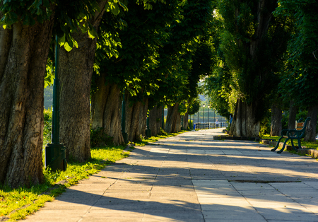 chestnut alley with benches in summertime. beautiful urban scenery in the morning Zdjęcie Seryjne