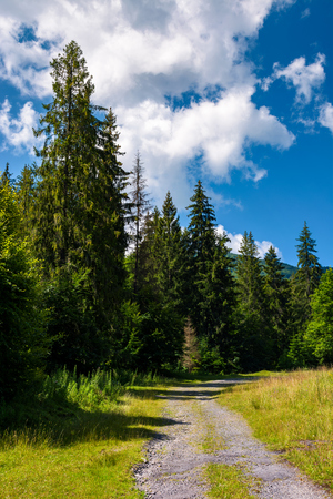 country road through spruce forest. lovely nature scenery on a fine summer day Stock Photo