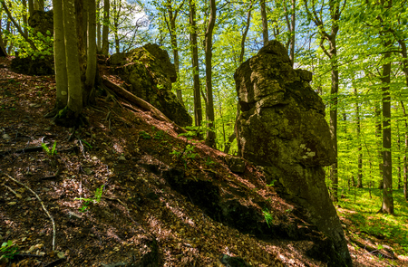 rocky formation among the green forest. mysterious place looks like stone idol. lovely place in wild woods
