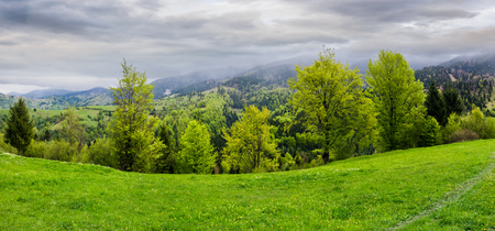 panorama of grassy hillside above the forest in mountains. dramatic cloudy sky on a rainy day. dull weather in springtime Stock Photo