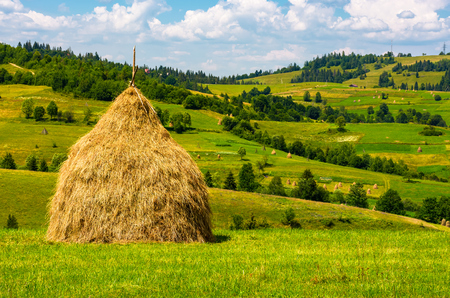 haystack on the grassy field. beautiful summer countryside of mountainous area Foto de archivo