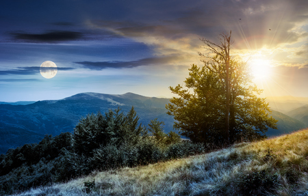 time change concept  tree on the grassy hillside. lovely summer landscape of Carpathian mountain Svydovets ridge with sun and moon. 写真素材