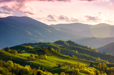 colorful sunset in Carpathian countryside. grassy hillsides with some trees in evening light. sky and fluffy clouds in pink light