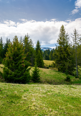 丘の上に森林を散らします。山岳地帯の美しい春の風景 写真素材